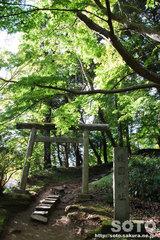 香取神宮(要石への道)