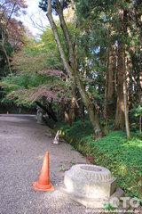 香取神宮(倒れた灯籠)