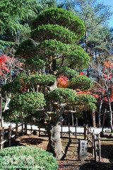 身曾岐神社(3)