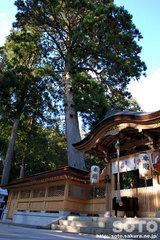 田村神社(7)