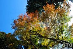 田村神社(紅葉1)