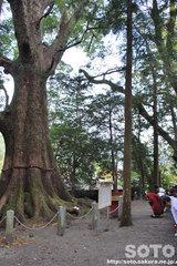 水屋神社(秋季例大祭3)