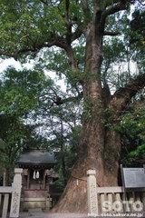 伊弉諾神宮(5)