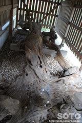 おのころ島神社(8)