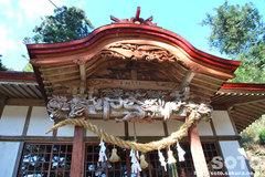 大杉(八坂神社)