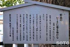 椿神社(3)