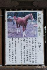 塩竃神社(神馬 金龍号)