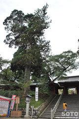 塩竃神社(石段と巨木)