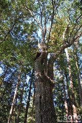 水屋神社(鹿子の木)