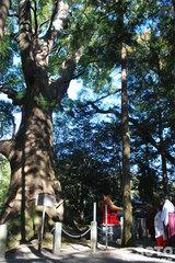 水屋神社(ご神木2)