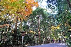 大神神社(参道)