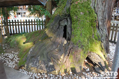大神神社(巳の神杉の根元)