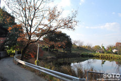 大神神社(池)