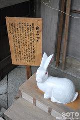 都農神社(撫でウサギ)