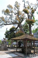 松江城(松江神社の手水舎)