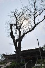 奥津姫神社(ご神木?)