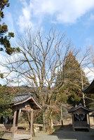 一つ目神社(2)