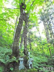 桜松公園(縁結びの木)