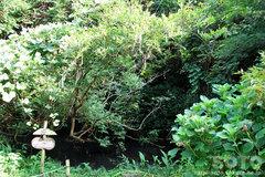 柿原養鱒場(藤と紫陽花)