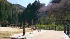 桜滝(1)