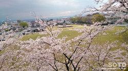 菊池市民広場と桜