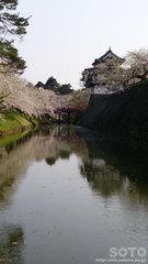 弘前城と桜(1)