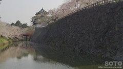 弘前城と桜(2)