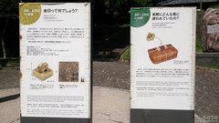 志賀島(金印公園2)