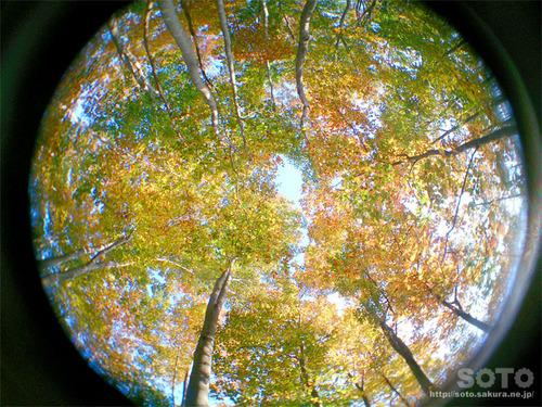 空気神社の紅葉2017