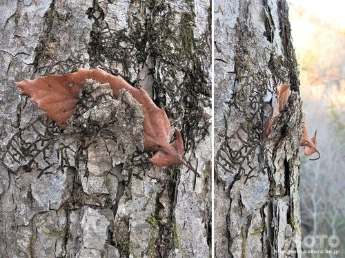 木の幹に枯れ葉