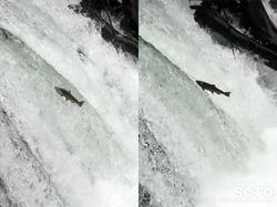 さくらの滝(4)