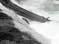 さくらの滝(2)