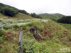 グリーンロード(牛道トンネル)