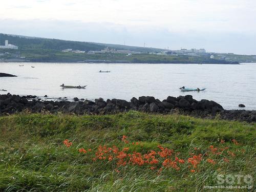 沓形のウニ漁
