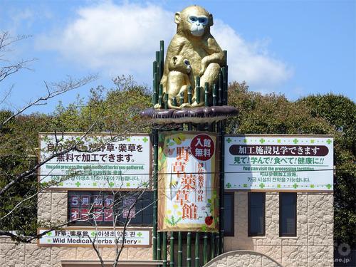 曽木の滝(野草薬草館)