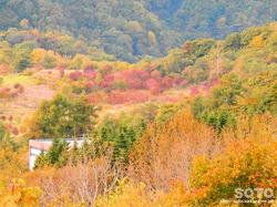 洞爺湖展望台(西山火口)