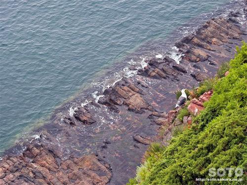オロンコ岩(21)