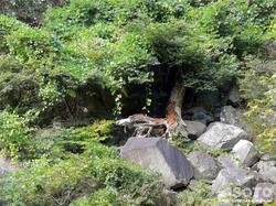 材木岩公園(3)