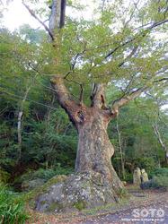 材木岩公園(7)