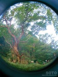 材木岩公園(8)