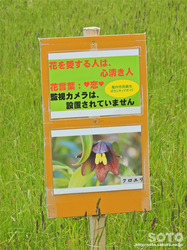宗谷岬(09)