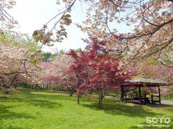 オニウシ公園(03)