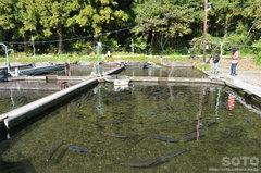 沼袋の名水(養魚場)