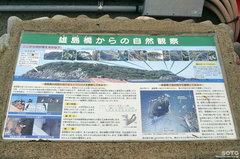 雄島橋からの自然観察