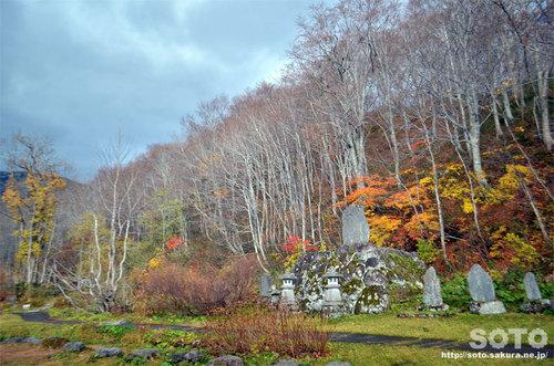 山形県立自然博物園の紅葉2015