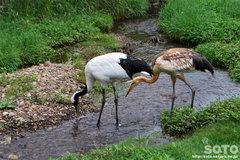 釧路市丹頂鶴自然公園(7)