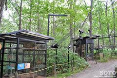 釧路市動物園(モモンガ/エゾリス檻)