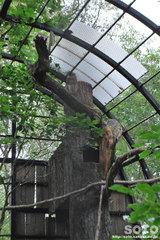釧路市動物園(シマフクロウ)