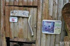 釧路市動物園(エゾクロテン)