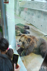 釧路市動物園(エゾヒグマ)